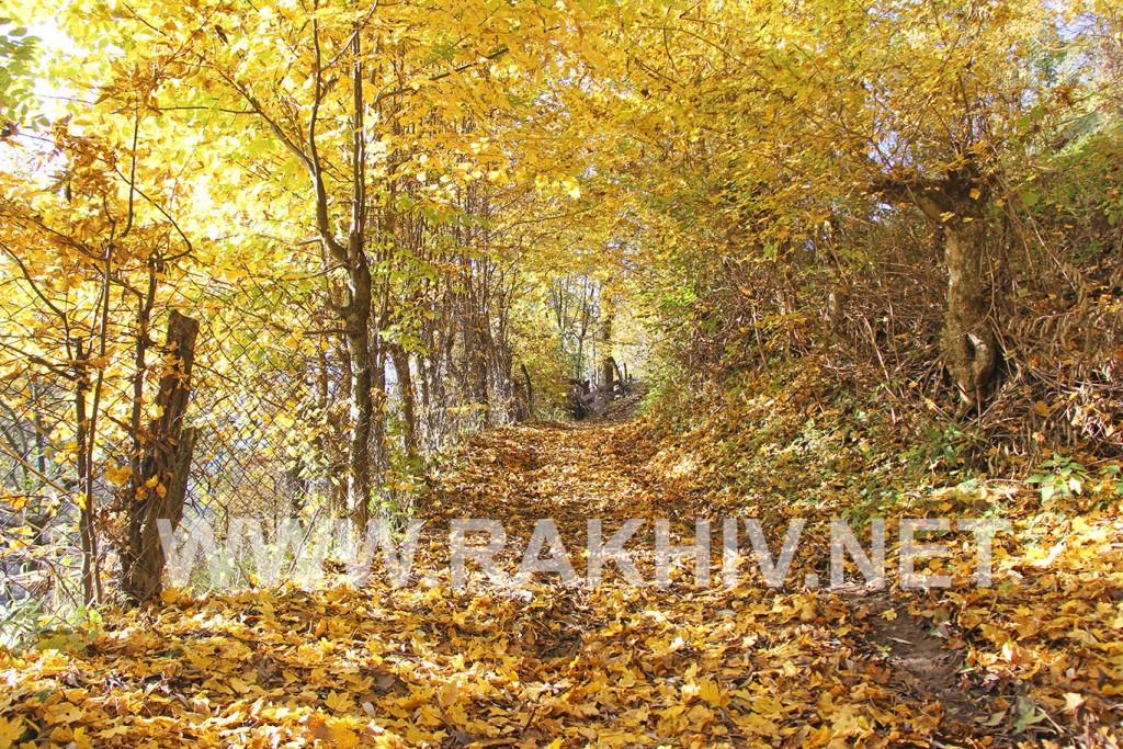 рахів-фото-осінь