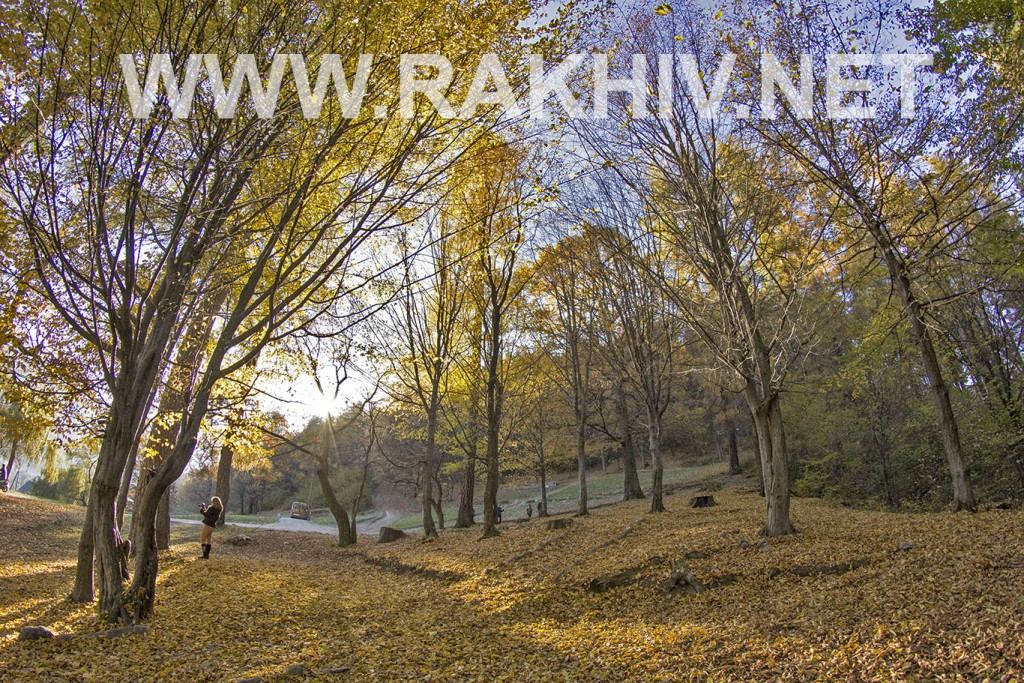 рахів_буркут_осінь