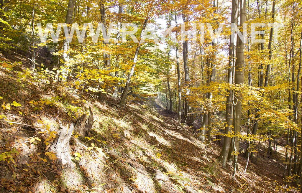 рахів_осінь-ліс
