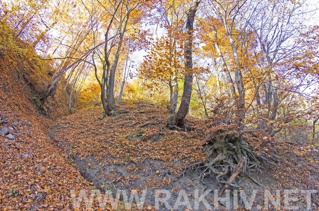 рахів_фото_ліс