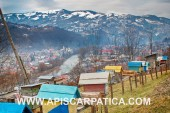 Бджолопакети та бджоломатки карпатки з гір Карпат.