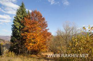 рахів_осінь