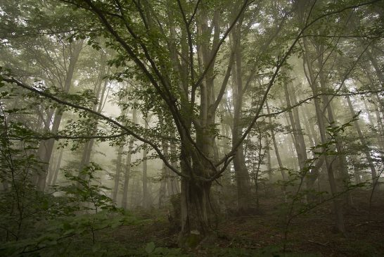 Одним із 10-ти переможців фотоконкурсу Вікіпедії став фотограф з Рахівщини