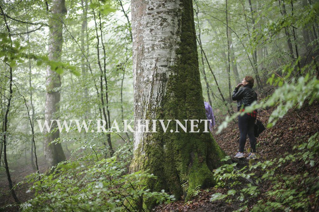 рахів ліс фото