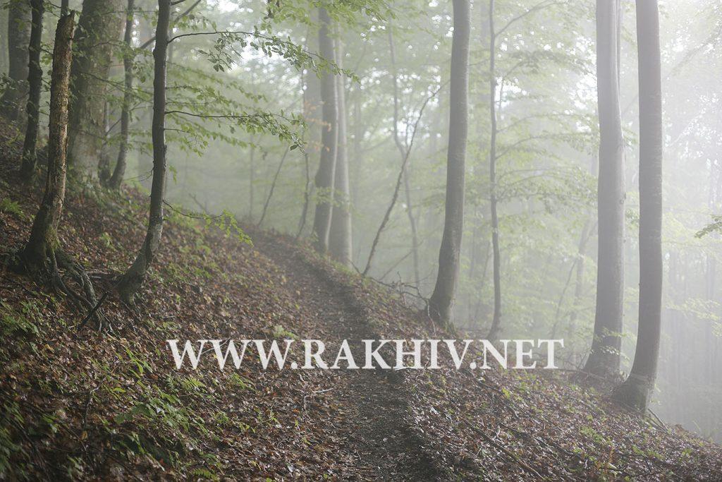 рахів-ліс