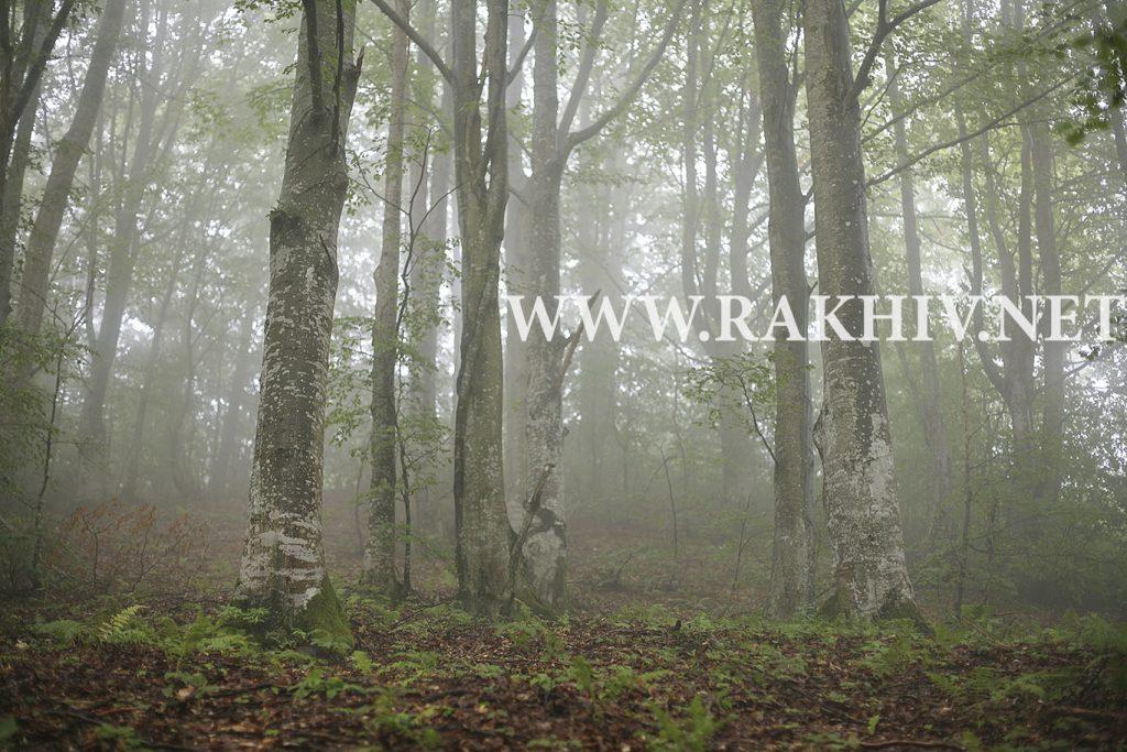 рахів ліс