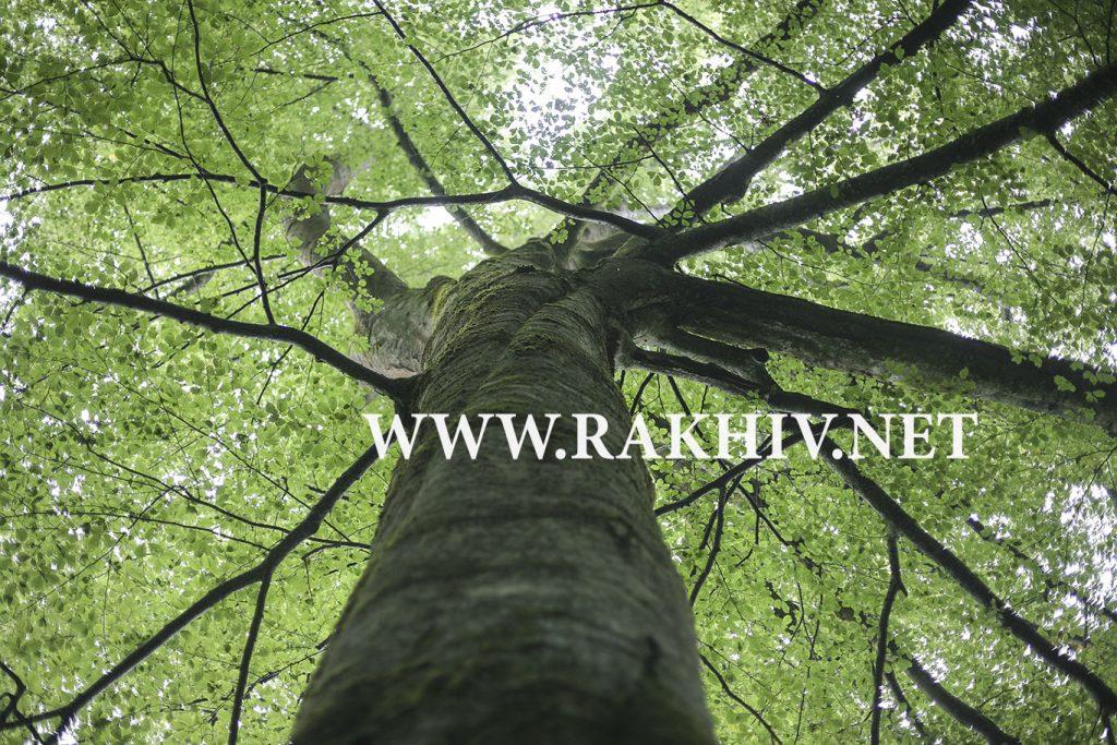 рахів_ліс