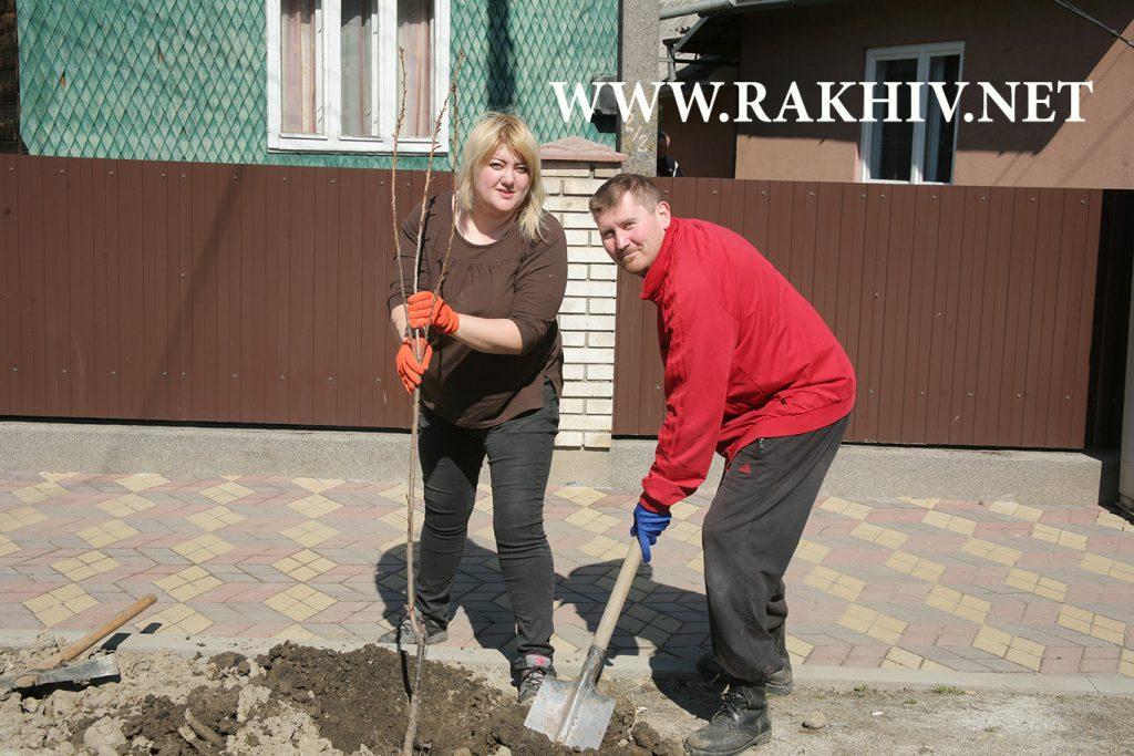 Рахів_новини-висаджування сакур