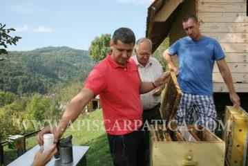 Дослідження Рахівського типу карпатських бджіл на гірських пасіках Рахівського району продовжуються.