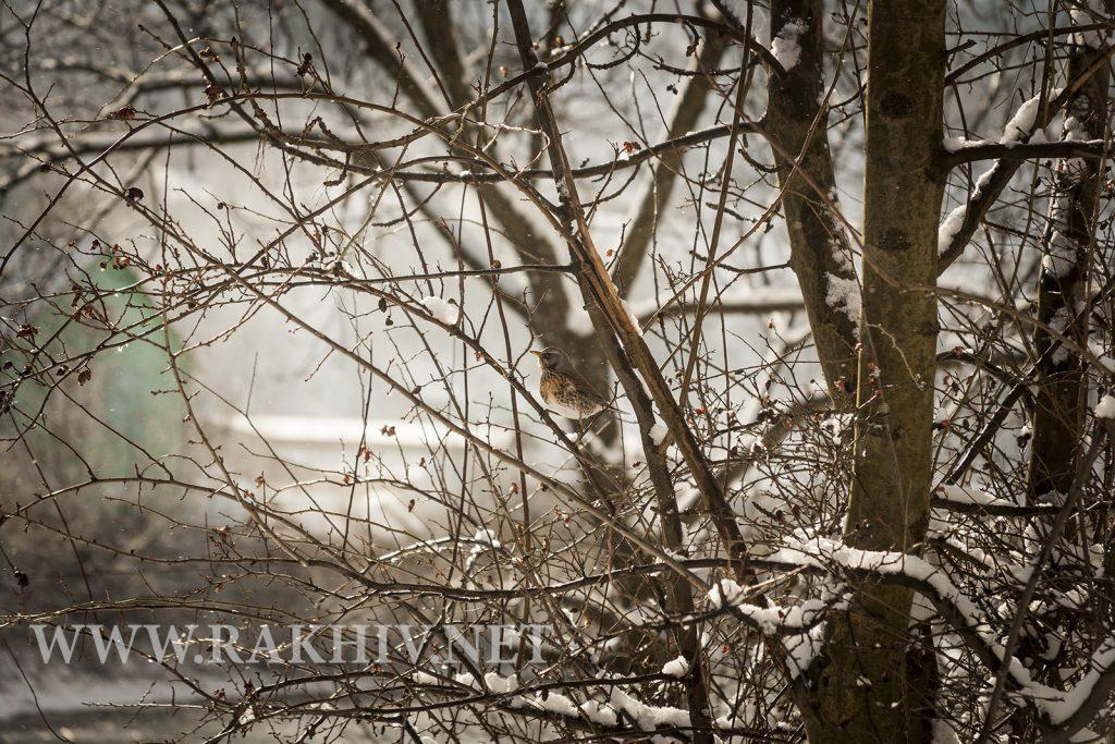 рахів_фото 2020 зимові